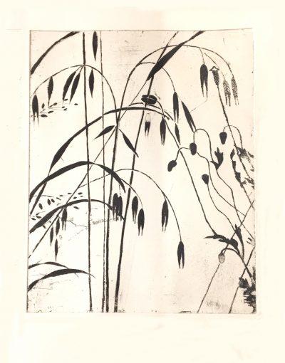 herbes gravure