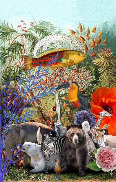 Drôle de zoo - Illustration numérique