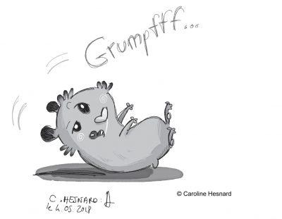 -recherche personelle-le hamster émotif